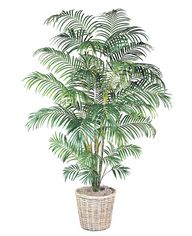 Areca Palm Tree Pot Included. 96 In.