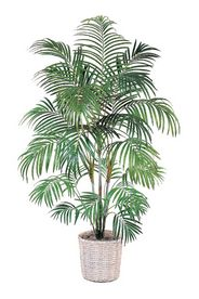 Areca Palm Tree 72 In.